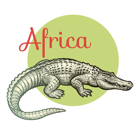 African animals. Crocodile. Illustration Vector Art. Style Vintage engraving. Hand drawing. Illustration