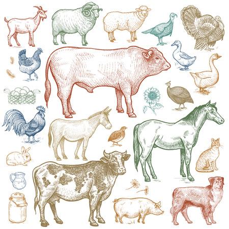 turkeys: Farm animals set. Vector.