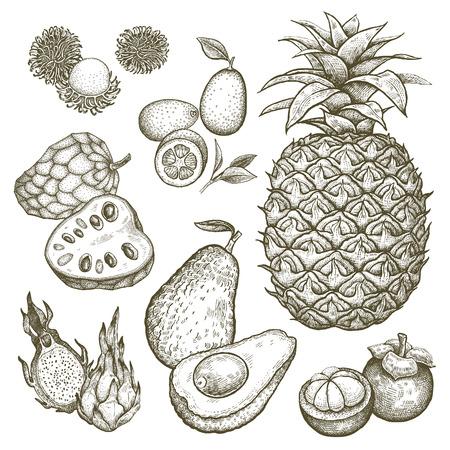 rambutan: Kumquat, pineapple, dragonfruit, rambutan, mangosteen, cherimoya, avocado. Black and white exotic fruit illustration. Vector hand drawing isolated on white background. Style vintage engraving.