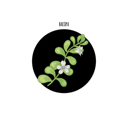 色植物白い背景の黒い円の Bacopa をベクトルします。薬用植物、ハーブ、花、果実、根のグラフィック イメージの概念。健康美容自然製品のパッケ