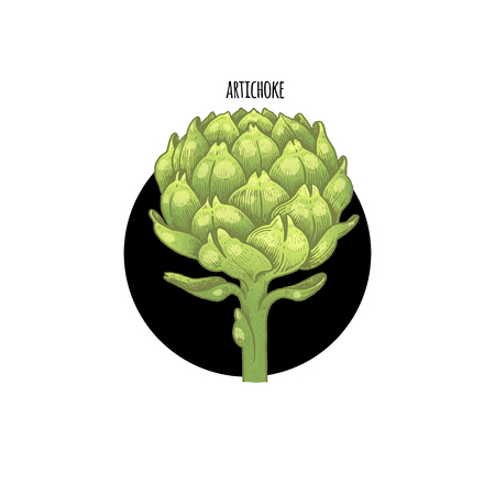 Vector color plant Artichoke in black circle on white background. Concept of graphic image of medical plants, herbs, flowers, fruits, roots. Design for package of health, beauty natural products.