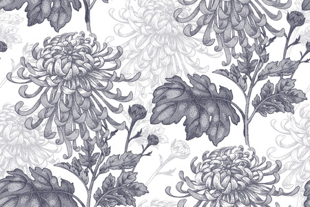 drapes: Flowers black chrysanthemum on a white background. Seamless pattern for a fabric, paper, wallpaper, textile, packaging, drapes. Vector illustration. Vintage.