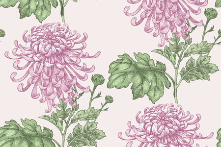 drapes: Flowers Pink chrysanthemum. Seamless pattern for a fabric, paper, wallpaper, textile, packaging, drapes. Vector illustration. Vintage.