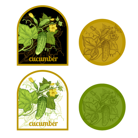 pickled: Set of labels with a picture of cucumber. Templates for creating labels packing vegetables. Vector illustration. Hand drawing.