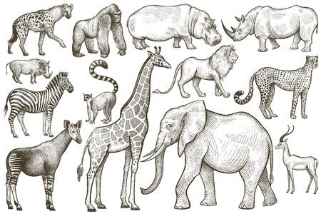 royal safari: Animals of Africa. Elephant, giraffe, zebra, lion, hippo, rhino, antelope, hyena, okapi, cheetah, gorilla, warthog, lemur. Illustration Vector Art. Vintage engraving. Hand drawing. Black and white.