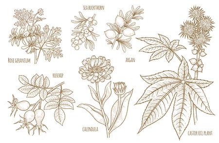 Calendula, églantier, Argan, Rose géranium, usine d'huile de ricin, argousier. Ensemble de plantes médicinales. Conçu pour créer un paquet de produits naturels de santé et de beauté.