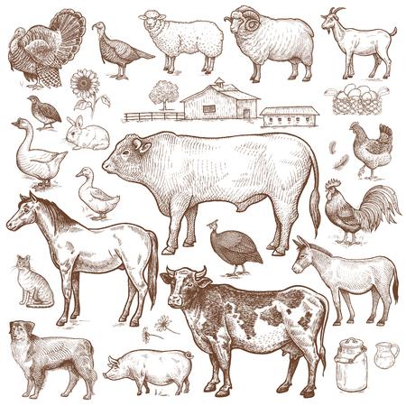 Vector grand ensemble thème de la ferme. Animaux bovins, volaille, animaux, paysage. Objets de nature isolé sur fond blanc. Dessins pour le texte illustration, decoupage, conception des couvertures, de la signalisation, des affiches. Vecteurs
