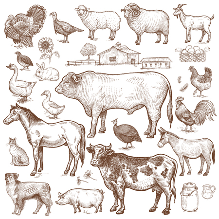 Vector large set  farm theme. Animals cattle, poultry, pets, landscape. Objects of nature isolated on white background. Drawings for text illustration, decoupage, design covers, signage, posters. Ilustração