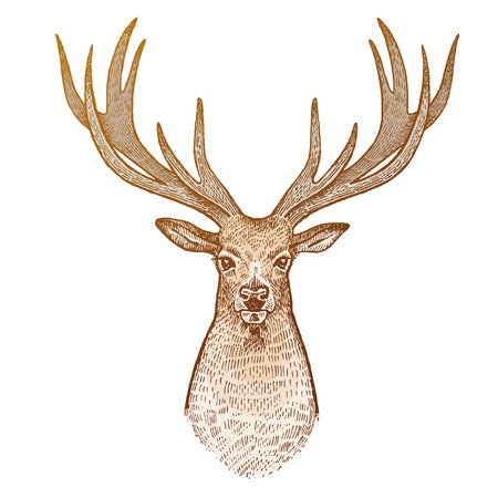Deer isolated on white background. Head of reindeer with big horns full face. Festive decoration card. Animal symbol of Christmas holiday. Print gold foil. art illustration. Vintage engraving.