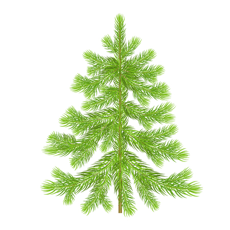 Christmas tree. Green spruce isolated on white background. Evergreen forest plants. illustration of a fir or pine. Template for design holiday gifts, greeting cards, signboard, signs, posters Illustration