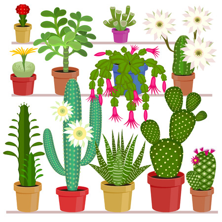 flowering aloe: Blooming cactus. Exotic flowers in pots on the shelves. illustration of plants on a white background.