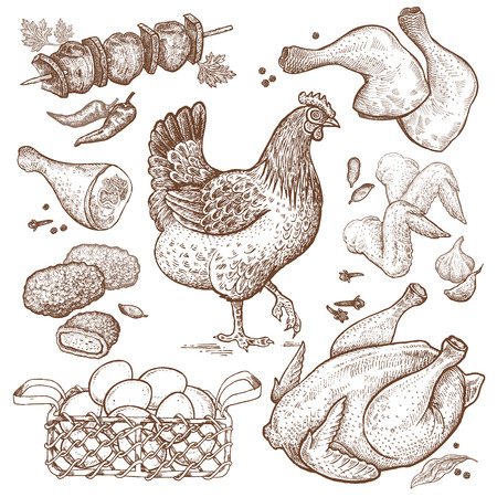 nuggets: Bird and food objects. Sketch of poultry hen. Split carcass of chicken, wings, legs, skewers of chicken, nuggets, basket eggs isolated on white background. Style Vintage engraving. Hand drawing Vector