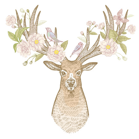 flower head: Head of deer with big horns full face and flowers, branches and leaves of a flowering plum tree. Symbol of spring. Isolated on white background. Vector art hand drawing illustration. Vintage engraving