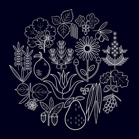 tea tree: Set medical herbs. Currant, olive, juniper, celandine, sage, avocado, arnica, acacia, lime, tea tree, oak, buckthorn, eucalyptus, birch, lemon, aloe, jojoba. Vector. White chalk on blackboard.