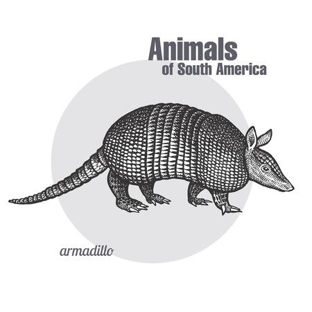 アルマジロは手の図面です。南アメリカ シリーズの動物。ビンテージ彫刻スタイル。