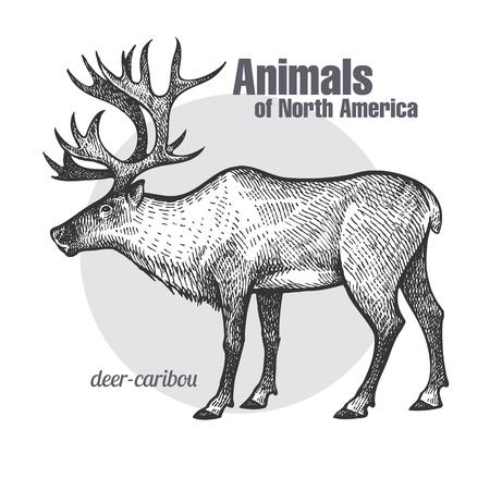 Kariboetekening van herten. Animals of North America-serie. Vintage gravure stijl. Vector illustratie kunst. Zwart en wit. Voorwerp van aard naturalistische schets. Stockfoto - 75107322