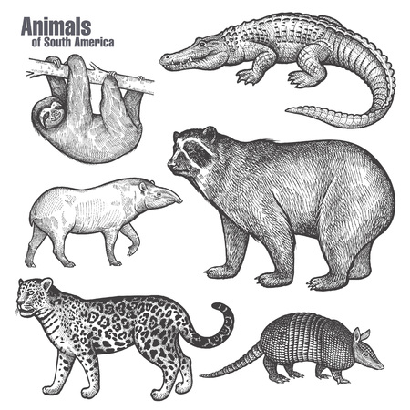 Animals of South America set. Spectacled Bear, Jaguar, Sloth, Caiman, Anteater, Tapir. Hand drawing. Vintage engraving style. Vector illustration art. Black and white. Object of nature naturalistic sketch.