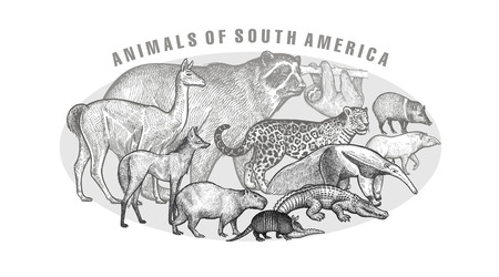 Poster with image of animals South America.