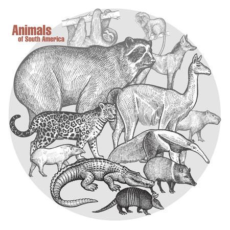spectacled: Animals of South America. Vector illustration art. Poster with a spectacled bear, llama, jaguar, tapir, anteater, caiman, battleship, sloth, wolf, lion tamarin, capybara, wild pig. Vintage engraving.