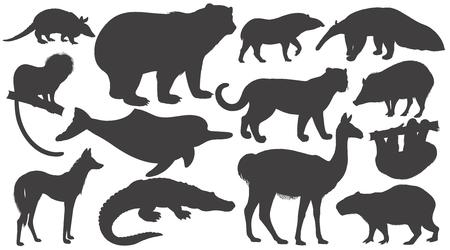 Black silhouettes animals of South America on white background set. Vector illustration art. Bear, battleship, tamarin, wolf, dolphin, lama, jaguar, anteater, peccary, sloth, tapir, capybara, caiman.