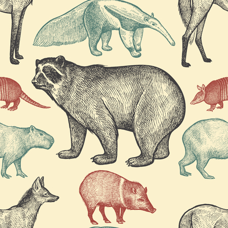 spectacled: Seamless pattern with animals South America. Spectacled Bear, Peccary, Capybara, Armadillo, Maned Wolf, Anteater on pastel background. Vector illustration art. Black, red,blue. Vintage engraving.