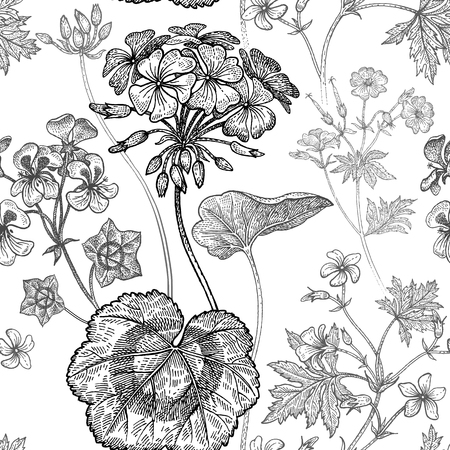 Geranium or Pelargonium flower. Seamless floral pattern. Vector illustration. Hand drawing art. Black and white graphics. Vintage engraving. Template for packaging, textile, paper, wallpaper, fabric. Illustration
