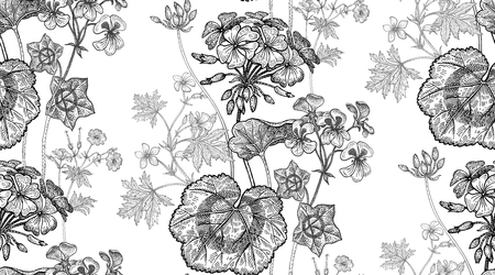 Geranium or Pelargonium flower. Seamless floral pattern. Vector illustration. Hand drawing art. Black and white graphics. Vintage engraving. Template for packaging, textile, paper, wallpaper, fabric. Ilustração