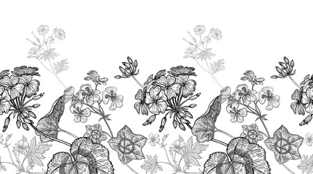 Geranium flower. Seamless floral pattern border. Vector illustration. Hand drawing art. Black and white graphics. Vintage engraving. Template design for packaging, textile, paper, wallpaper, fabric. Ilustração