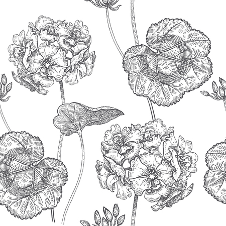 Geranium or Pelargonium flower. Seamless floral pattern. Vector illustration. Hand drawing art. Black and white graphics. Vintage engraving. Template for packaging, textile, paper, wallpaper, fabric. Ilustrace
