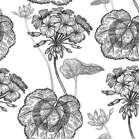 Geranium or Pelargonium flower. Seamless floral pattern. Vector illustration. Hand drawing art. Black and white graphics. Vintage engraving. Template for packaging, textile, paper, wallpaper, fabric. Vettoriali
