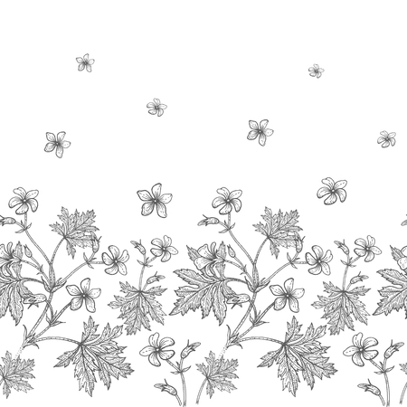 Geranium flower. Seamless floral pattern border. Vector illustration. Hand drawing art. Black and white graphics. Vintage engraving. Template design for packaging, textile, paper, wallpaper, fabric. Vettoriali