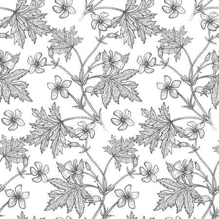 Geranium flower. Seamless floral pattern. Vector illustration. Hand drawing art. Black and white graphics. Vintage engraving. Template design for packaging, textile, paper, wallpaper, fabric. Illustration