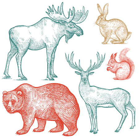 숲 동물 세트. 손 그리기 스케치 색 잉크 흰색 배경에 고립. 벡터 아트 그림입니다. 빈티지 조각 스타일. 자연 개체 사슴, 사슴, 곰, 토끼, 다람쥐. 야생