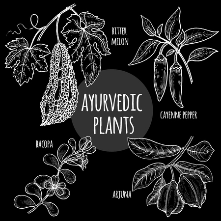 Arjuna, Bacopa, cayenne pepper, bitter melon graphics chalk on a blackboard. Vector set illustration medical Ayurvedic herbs and plants. Natural supplements, concept beauty and health. Illustration