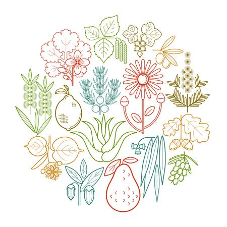 Stel medische kleurkruiden in cirkel. Aalbes, olijf, jeneverbes, stinkende gouwe, salie, avocado, arnica, acacia, limoen, theeboom, eik, duindoorn, eucalyptus, berk, citroen, aloë, jojoba. Vector. Wit en zwart.
