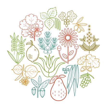 Set medical color herbs in circle. Currant, olive, juniper, celandine, sage, avocado, arnica, acacia, lime, tea tree, oak, buckthorn, eucalyptus, birch, lemon, aloe, jojoba. Vector. White and black. Illustration