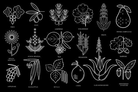 Geneeskrachtige planten vector illustratie. Wit krijt op het bord. Beelden van medische kruiden in minimale stijl mono lijn. Voor het ontwerpen van natuurlijke geneesmiddelen voor de gezondheid, creëer een pakket lichaamsverzorging, haar. Stock Illustratie