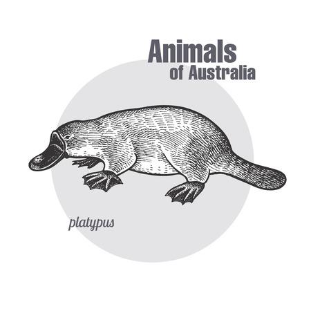 Dessin à la main Platypus ou duckbill. Série Animaux d'Australie. Style de gravure vintage. Illustration d'art vectoriel. Isolation graphique noire sur fond blanc. L'objet d'un croquis naturaliste. Banque d'images - 79739796