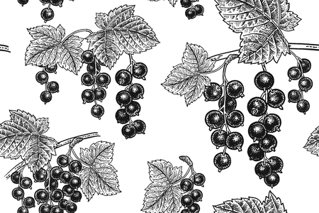 Black currant berries. Seamless pattern. Realistic fruit, branch and leaf. Black and white vegan food. Vector illustration art. Vintage engraving. Hand drawing. Nature motifs for kitchen design.