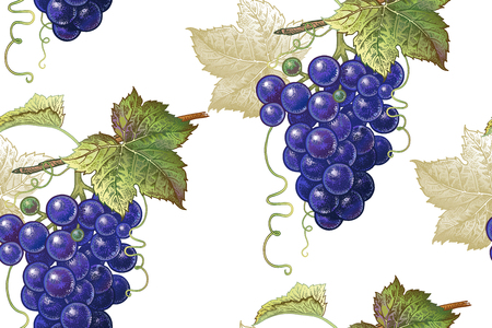 A Seamless botanical pattern with vine grapes on a white background. Vintage. Victorian style. Vector illustration. Template for kitchen design, food packaging, paper, textiles, dishes, interior.