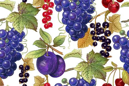 Een naadloos botanisch patroon met druiven, pruim, rode en zwarte bes, kers op witte achtergrond. Wijnoogst. Victoriaanse stijl. Vector illustratie. Voor keukenontwerp, voedselverpakking, papier, interieur