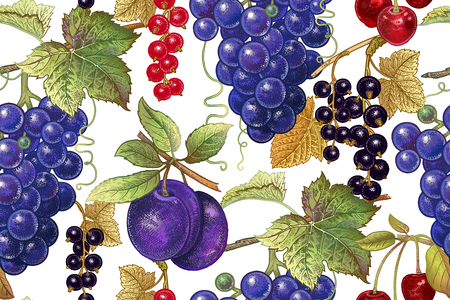 A Seamless botanical pattern with grapes, plum, red and black currant, cherry on white background. Vintage. Victorian style. Vector illustration. For kitchen design, food packaging, paper, interior