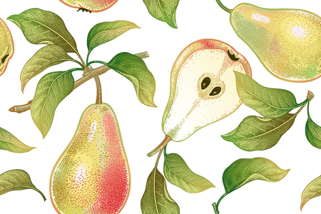 A Seamless pattern with pears. Realistic vector illustration plant. Hand drawing with colored pencils. Fruit, leaf, branch of tree on white background. For kitchen design, food packaging. Vintage.