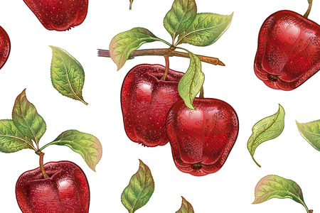 A Seamless pattern with red apples. Realistic vector illustration plant. Hand drawing with colored pencils. Fruit, leaf, branch of tree on white background. For kitchen design, food packaging. Vintage.