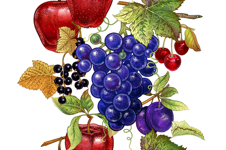 A Seamless pattern with fruits apple, grape, cherry, plum, black currant on white background.  Realistic vector illustration plant. Hand drawing. Decoration for kitchen design, food packaging. Vintage.
