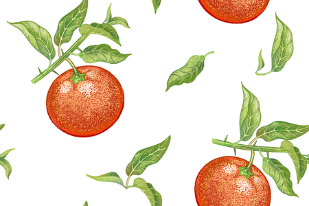 A Seamless pattern with tangerines. Realistic vector illustration plant. Hand drawing with colored pencils. Mandarin fruit, leaf, branch on white background. For kitchen design, food packaging. Vintage.