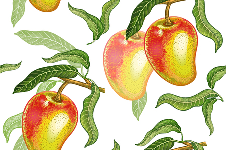 A Seamless pattern with mango. Realistic vector illustration plant. Hand drawing with colored pencils. Fruit, leaf, branch of tree on white background. For kitchen design, food packaging. Vintage.