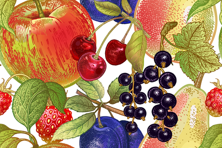 Vintage seamless pattern. Fruits apple, cherry, plum, black currant, strawberry, pear on white background.  Realistic vector illustration. Hand drawing. Decoration for kitchen design, food packaging.