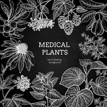 Composizione con erbe medicinali e posto per l'iscrizione. Incisione stile vintage. Disegno a mano Illustrazione vettoriale per testi di design e poster di medicina alternativa. Gesso bianco su un bordo nero.