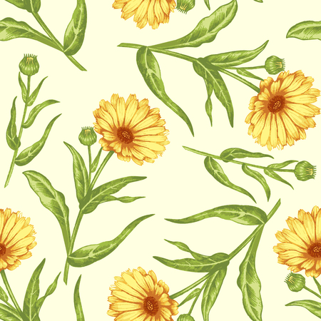 Seamless background for textile, paper, web, tissue. Illustration flowers calendula. Vector.